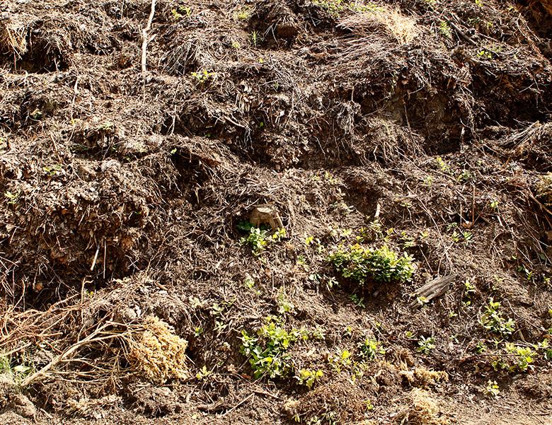 Kompost Erden Nord – Entsorgung/Bodenaushub