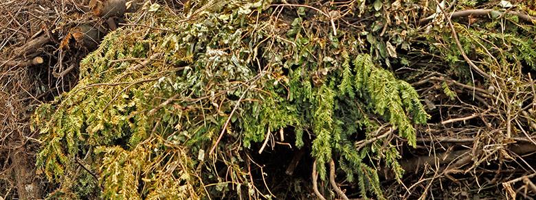 Kompost Erden Nord – Entsorgung/Grünschnitt 02