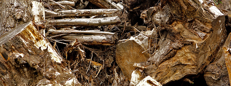 Kompost Erden Nord – Entsorgung/Stubben