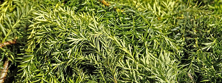 Kompost Erden Nord – Annahme und Entsorgung Grünschnitt