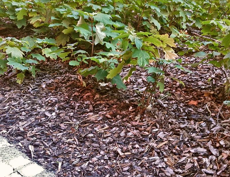Kompost Erden Nord – Anwendungsbeispiel zu Rindenmulch