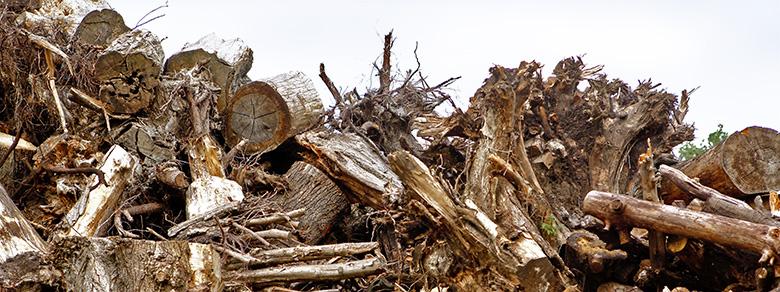 Kompost Erden Nord – Stubben als Brennmaterial