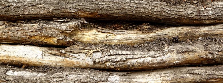 Kompost Erden Nord – Baumstämme als Brennmaterial