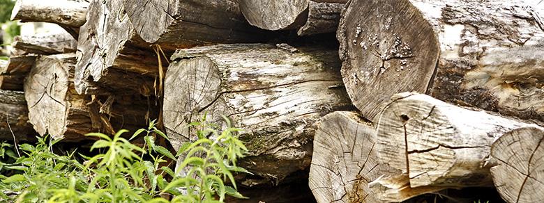 Kompost Erden Nord – Holzstämme als Brennmaterial
