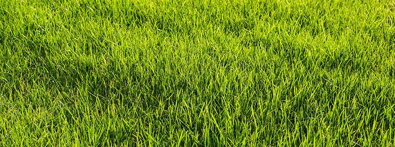 Kompost Erden Nord – Rasen