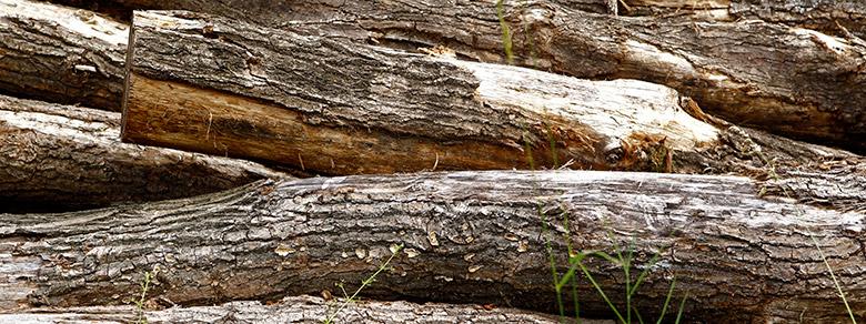 Kompost Erden Nord – Produkte/Holzstämme